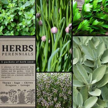 """Herbs- Perennials"" Seed Collection"