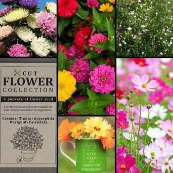 """Cut Flower"" Seed Collection"