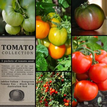 """Tomato"" Seed Collection"