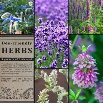 """Bee-Friendly Herbs"" Seed Collection"