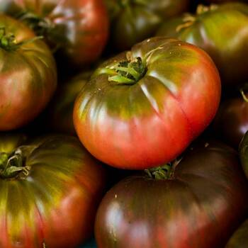 Tomato- Cherokee Purple