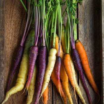 Carrot- Rainbow Mix