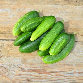 Cucumber- Green gem