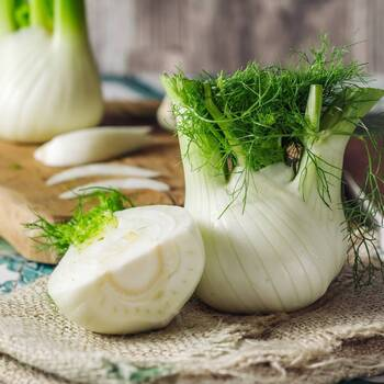 Fennel, Florance