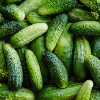 Cucumber- Boston Pickling
