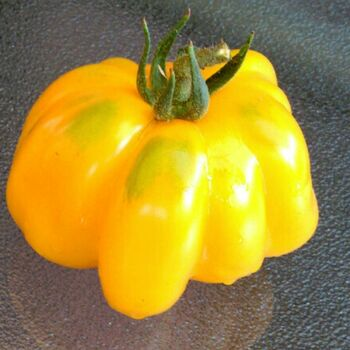 Tomato- Yellow Stuffer