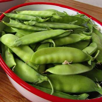 Snow Pea- Mammoth Melting