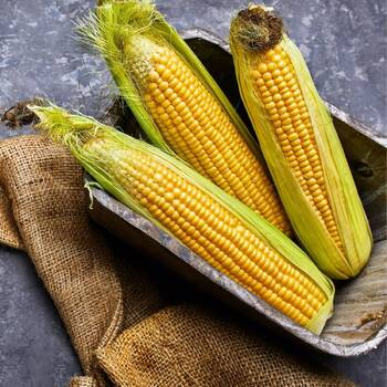 Corn, Sweet- Hawaiian