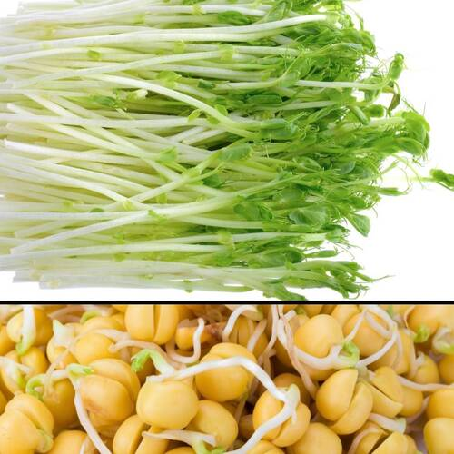 Snow Pea Sprouts 100g