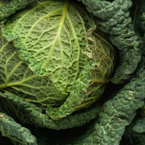 Cabbage, Savoy- Green Vertus