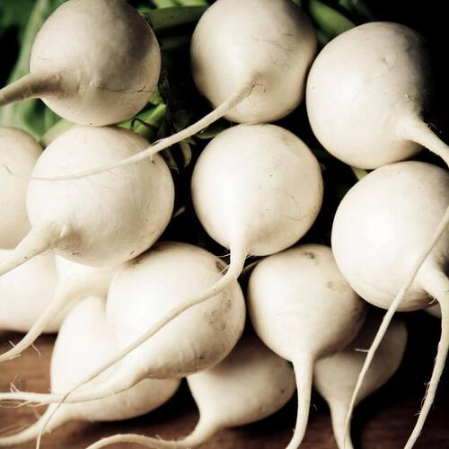 Radish- White Beauty