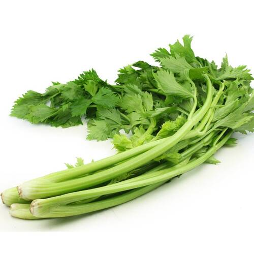 Celery- Chinese