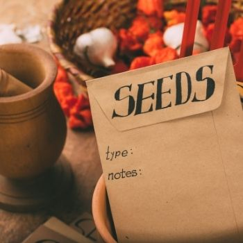 How to Store Your Seeds