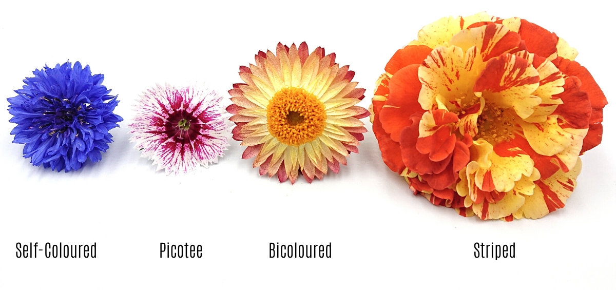 Flower colour types
