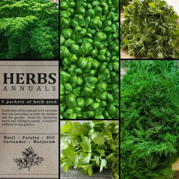 """Herbs- Annuals"" Seed Collection"