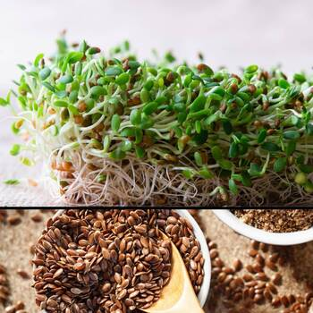 Sprouting Seeds- Linseed ORGANIC