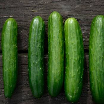 Cucumber- Poinsett