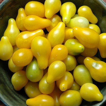 Tomato- Yellow Pear