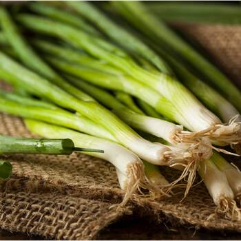 Bunching Onion- Straight Leaf