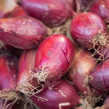 Onion- Long Tropea Red