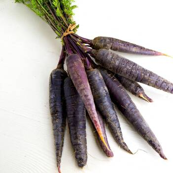 Carrot- Cosmic Purple