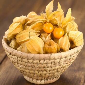 Cape Gooseberry- Golden Nugget