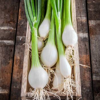 Bunching Onion- White Lisbon