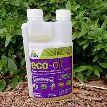 Eco Oil Organic Insecticide- Concentrate 500ml