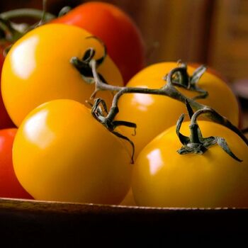 Tomato- Yellow Grosse Lisse