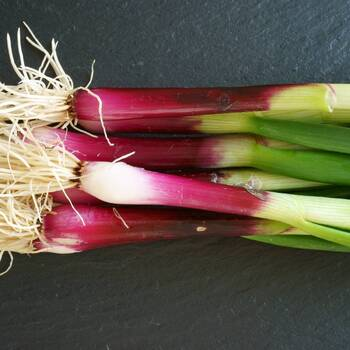 Bunching Onion- Red Beard