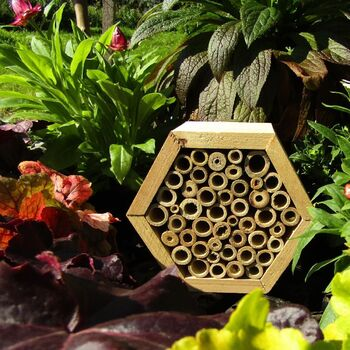 Small Hexagon Bee & Insect House