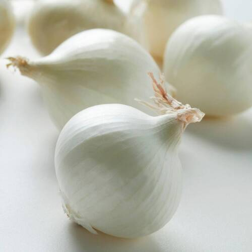 Onion- Early White Spanish