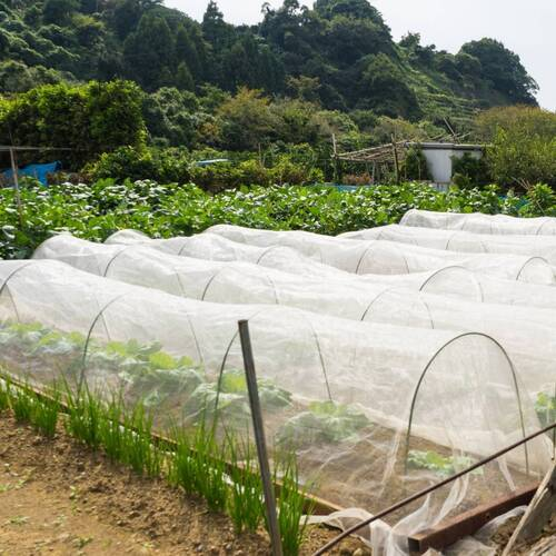 Insect Exclusion Net- 6m x 6m